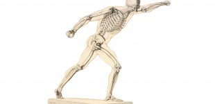 scheletro-umano-310x150