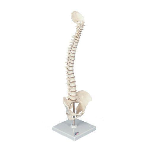 Mini colonna vertebrale, elastica A18/20