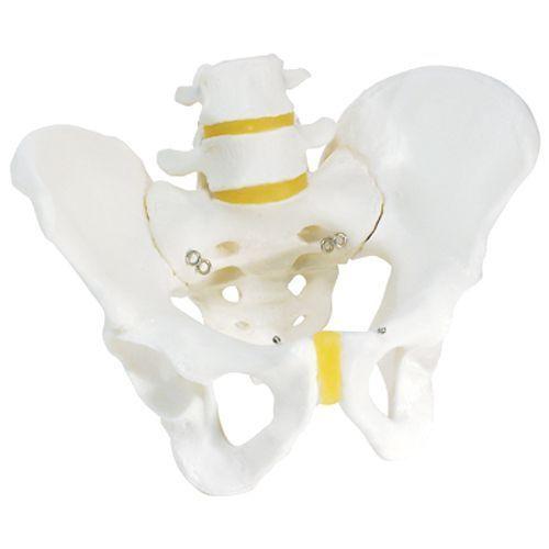 Scheletro di bacino, maschile A60