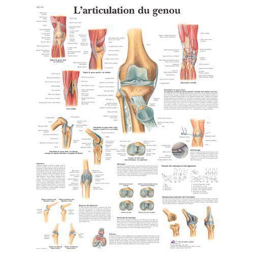 Tavola anatomica L'articolazione del ginocchio VR2174L 3B Scientific