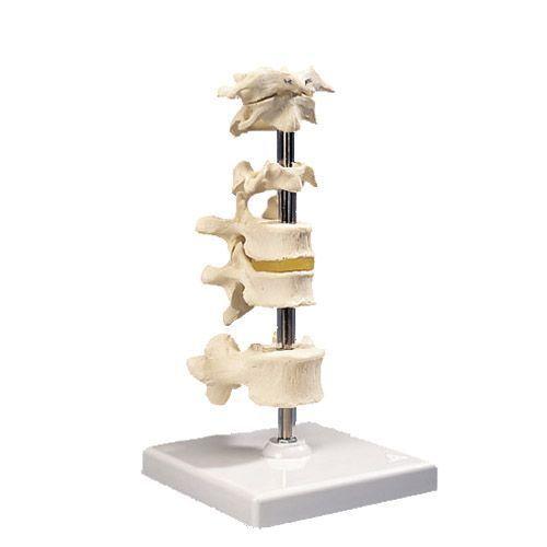 Modello di 6 vertebre A75