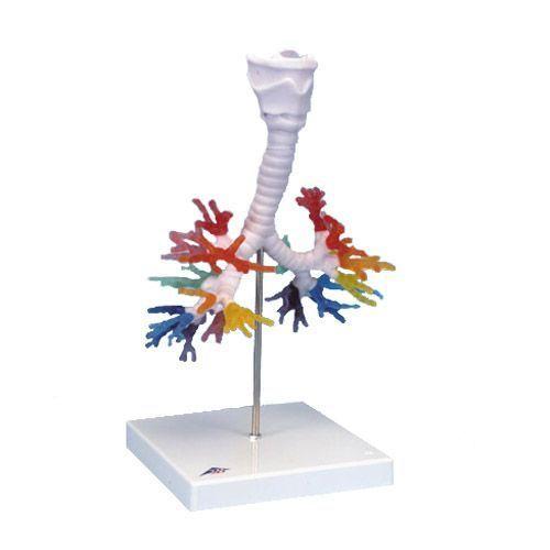 CT dell'albero bronchiale con laringe G23