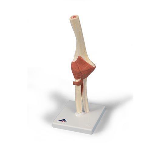 Modello funzionale di lusso dell'articolazione del gomito A83/1