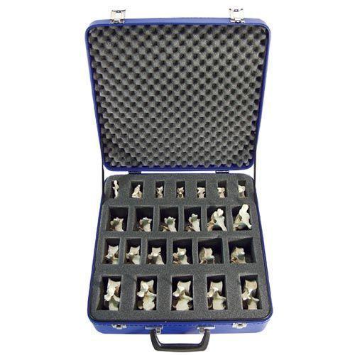 Set con 24 vertebre BONElike™ A793