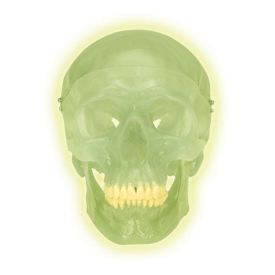 Cranio fluorescente A20/N