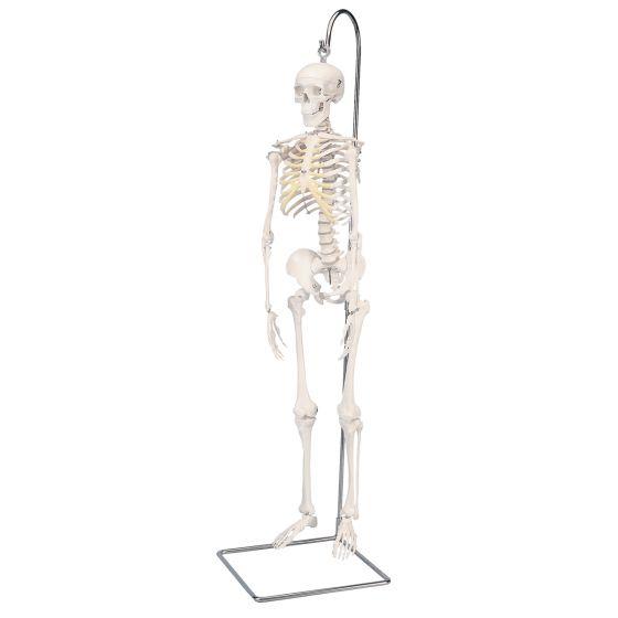 "Mini scheletro ""Shorty"", base pensile A18/1"