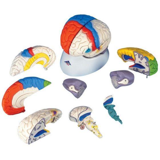 Modello funzionale del cervello in 8 parti C22